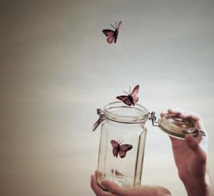 art-butterfly-fly-jar-photography-Favim.com-132143_large